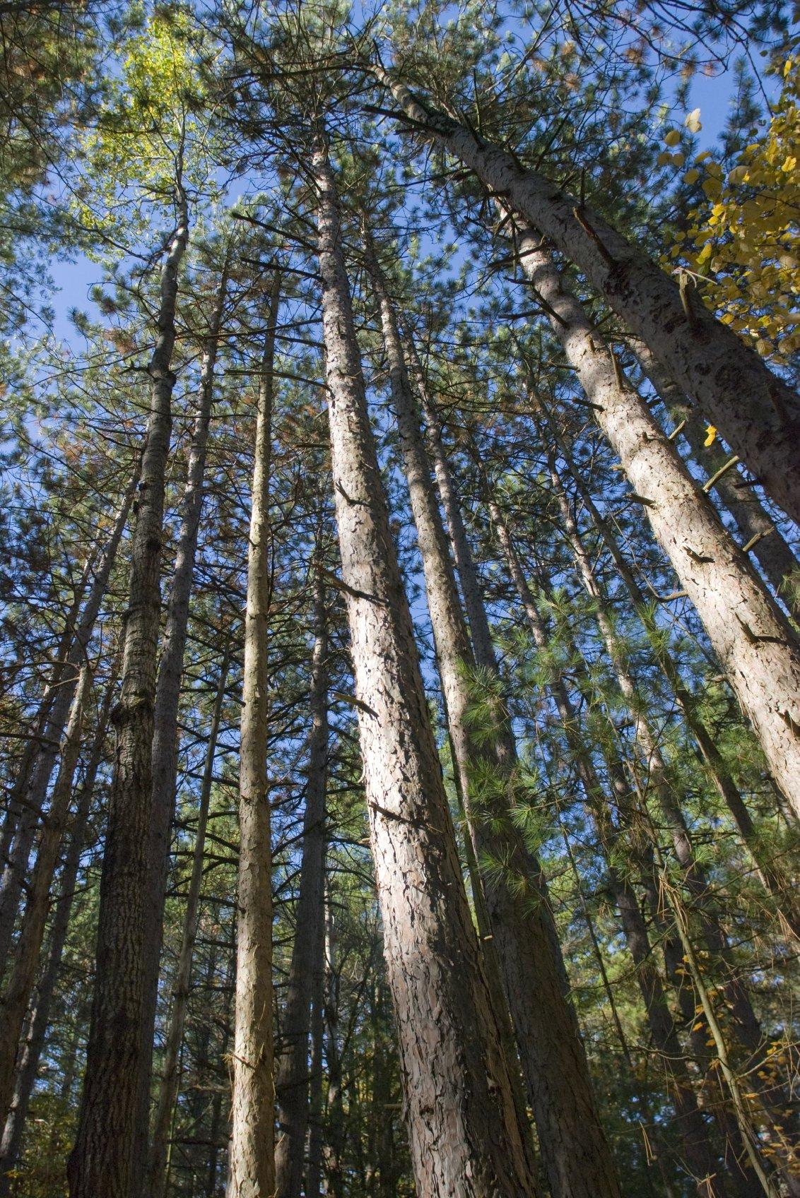 We Buy Land & Timber